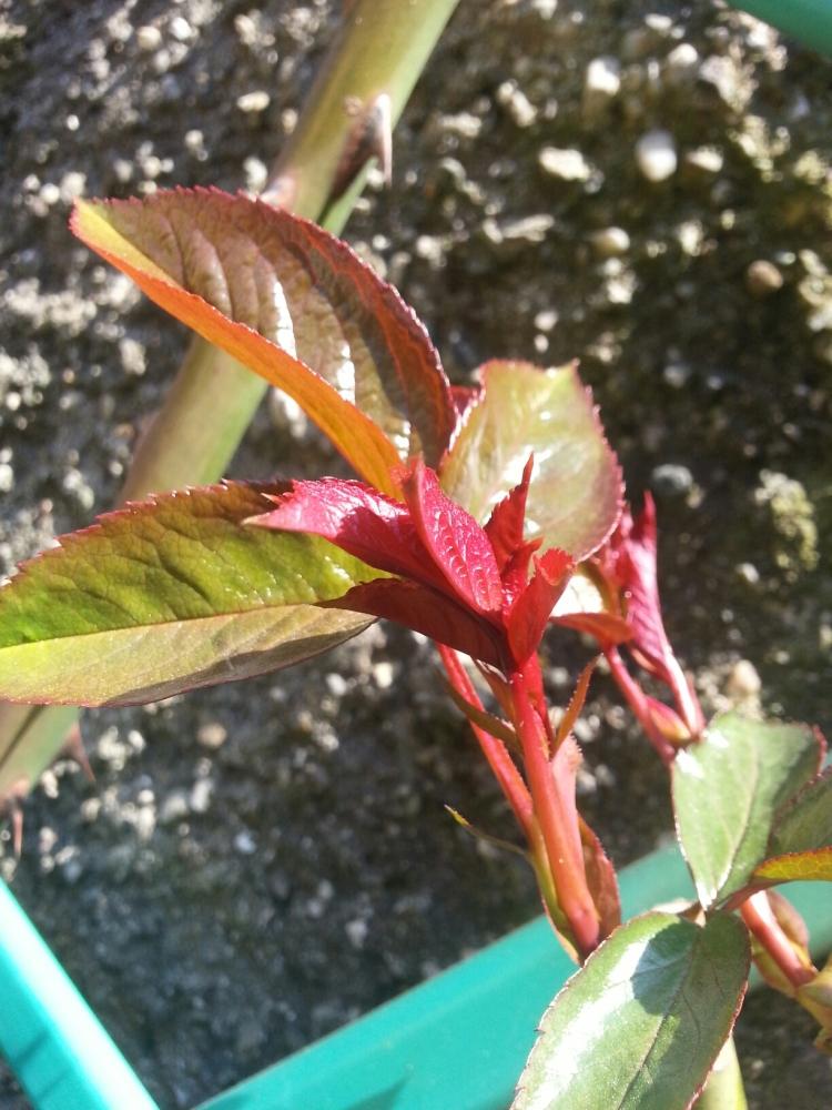 Il risveglio della natura a primavera. (3/3)
