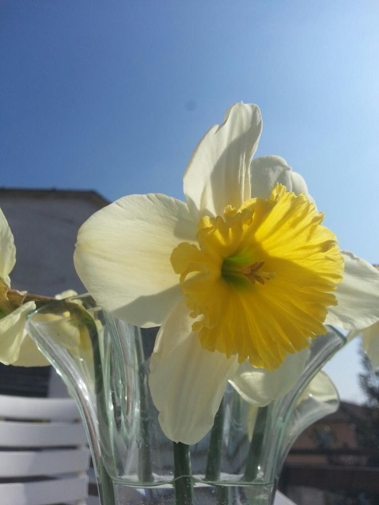 Il risveglio della natura a primavera. (2/3)
